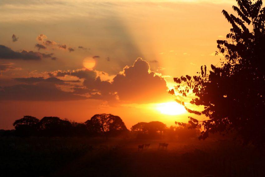 Crepúsculo. Foto Constanza, Semillas de Acacia.