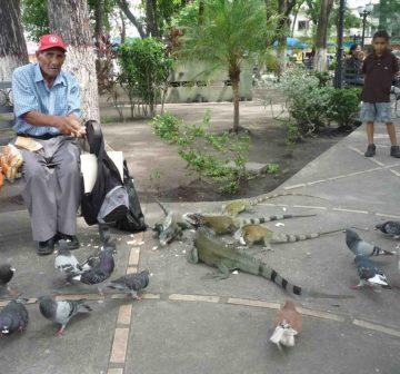 Visitante alimentando a los animales que hacen vida en la plaza. Foto M. Araque.