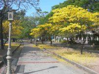 Avenida Las Delicias de Maracay. Foto Gustavo Ojeda
