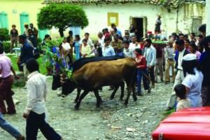FIESTAS-SAN-ISIDRO-LABRADOR Municipio Boconó, estado Trujillo. Foto IPC