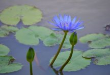 En el JBM es la Naturaleza la que pinta las flores de azul. Foto Willliam Ceballos / Noticiaaldia.com