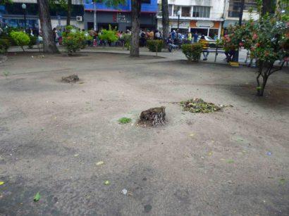 Plaza José Félix Ribas, Barinas. Destrucción de plantas.