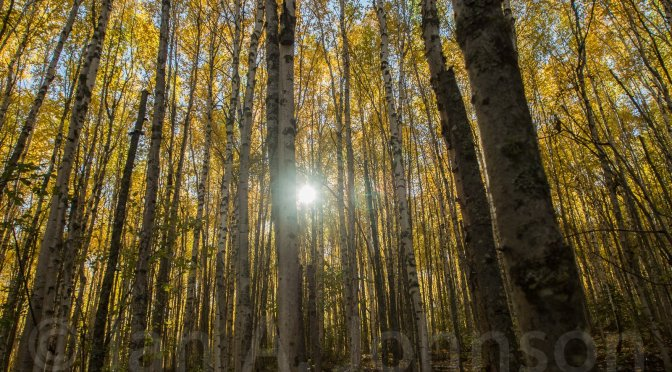 Subsistence and Fall in Alaska