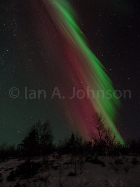 The watermelon aurora.
