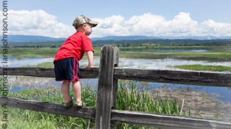 My nephew, Dane, looks out over the wetlands of Kootenai NWR. Although he wasn't interested in all of the birds, he loved seeing the baby geese!