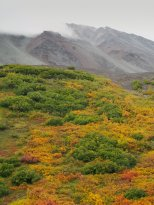 (C) Chuck Johnson. Fall colors along the Denali Highway