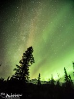 The Milky Way and Aurora Borealis collided in Denali National Park! What an incredible thing to see!