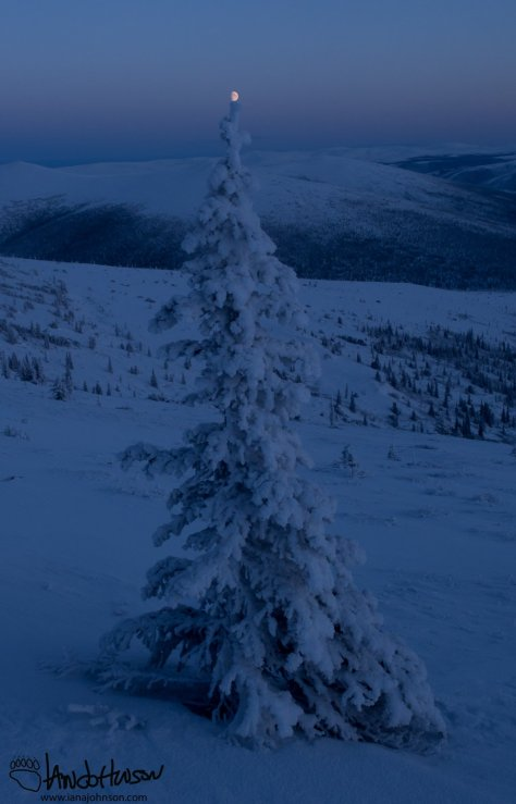 Christmas came early to the Pinnell Mountain Trail - star on top of the tree!
