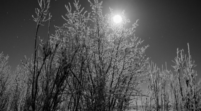 Moonlight Winter Wonderland in Black-n-white… or Color?