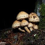 August 17th : Mushrooms in the dark