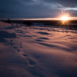 November 20th : A burst of sunrise illuminating old fox tracks