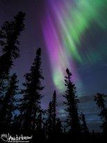 April 9th : Purple splendor