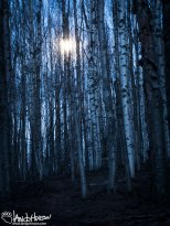 May 2nd : Moonlight in the birches