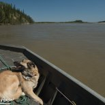 May 19th : On the Tanana