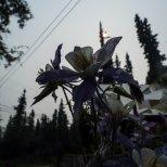 June 25th : Flowers under a smokey sun