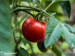 July 17th : Summer garden bounty