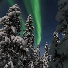 The aurora while up-close and personal in the black-spruce forest!