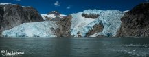 """The Northewestern Glacier spill from the Harding Ice Field into the ocean. The """"calving"""" of this glacier, and others in the bay provide the icebergs for the harbor seals."""