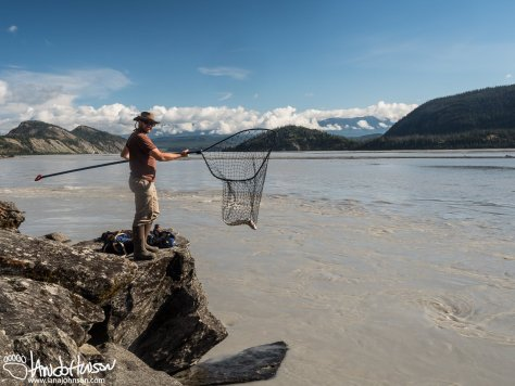 The personal use fishery at Chitina River allows you to literally scoop them from the raging waters.
