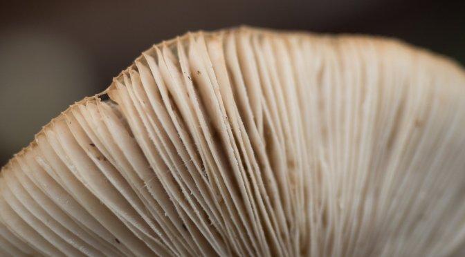 Oh My, Fungi!