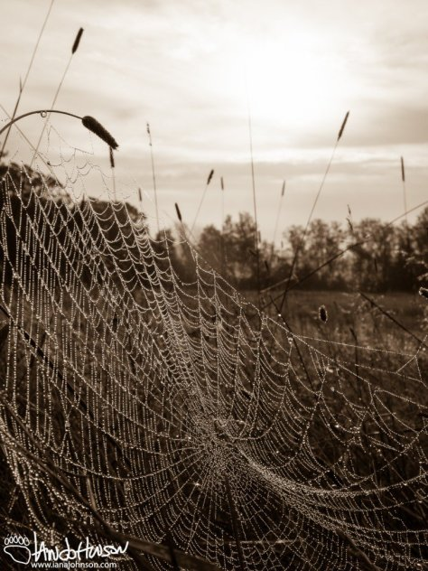 Spider Web Dew in the Sunrise