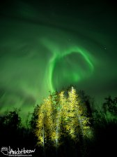 "The trees in this image have been ""light painted"" so they show up and fuse together autumn with the aurora."