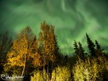 Mission success! Capturing this full-sky aurora over some beautiful autumn foliage.