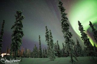 The aurora creeps in over the Dog Yard of Black Spruce Dog Sledding.
