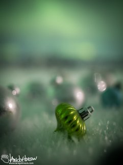 A drop of green aurora fell from the sky and landed in the snow :)