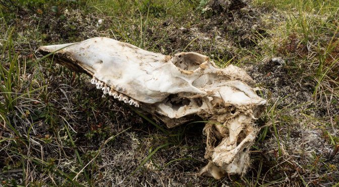 The Likelihood of Competition In The Yukon Flats