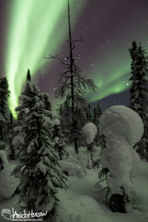 Aurora Borealis Alaska Fairbanks Winter Snow