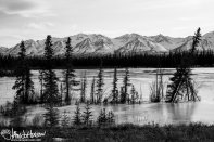 A row of spruces are locke d in the ice in front of the mountains.