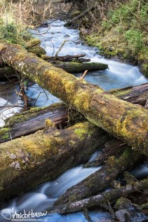 Old hemlock or spruce criss-cross over a fast-flowing river in Hoonah, Alaska