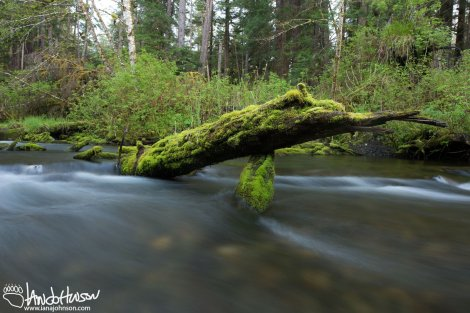 Southeast Alaska River