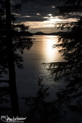 A sunset through some tall spruces along the trail to Mosquito Cove