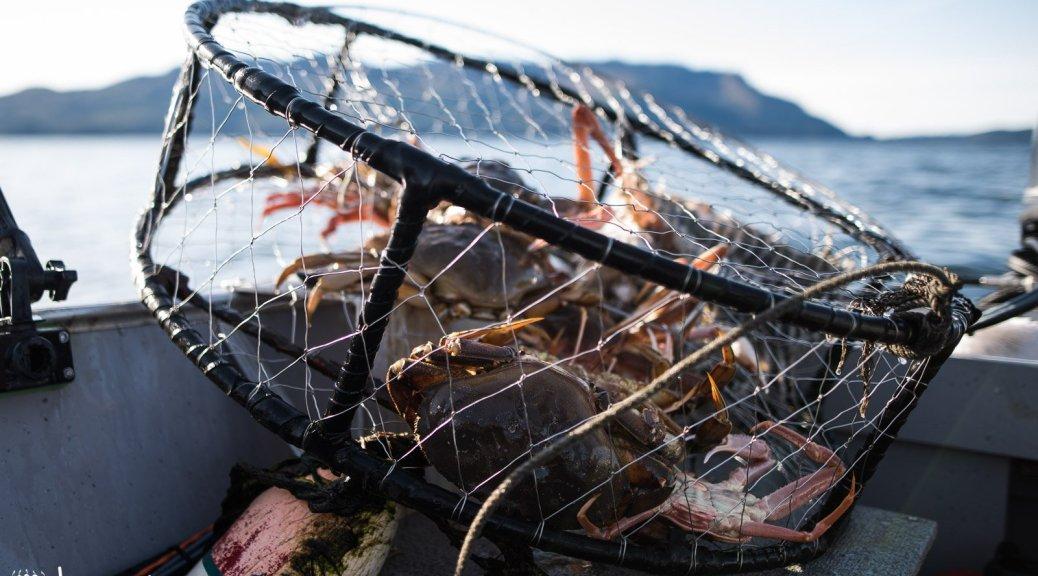 Alaska, Cockles, Seafood, Subsistence