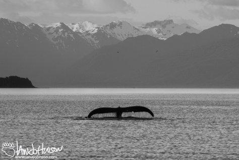 Whale Tail, Hoonah, Alaska