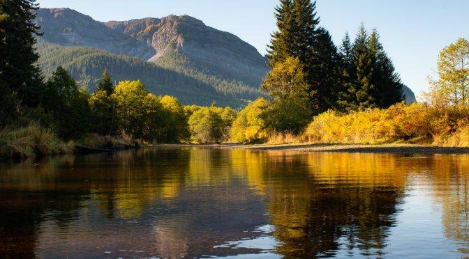 Spasski River, Salmon Berry, Yellow, Foliage, Autumn