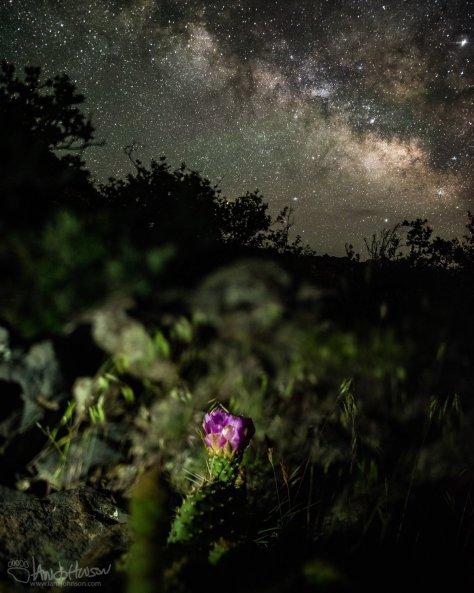 Zion National Park, Milky Way, Stars, Photography