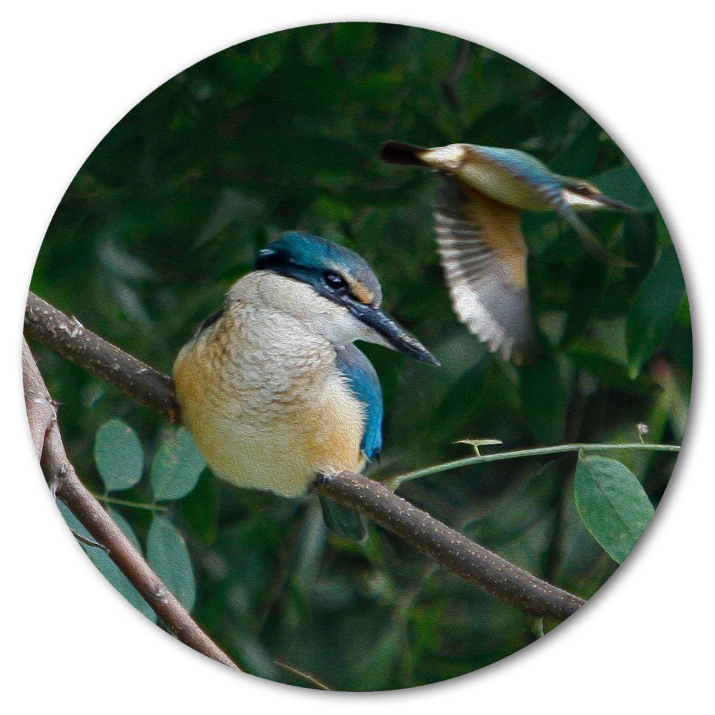 The Kingfishers, photography visual art.
