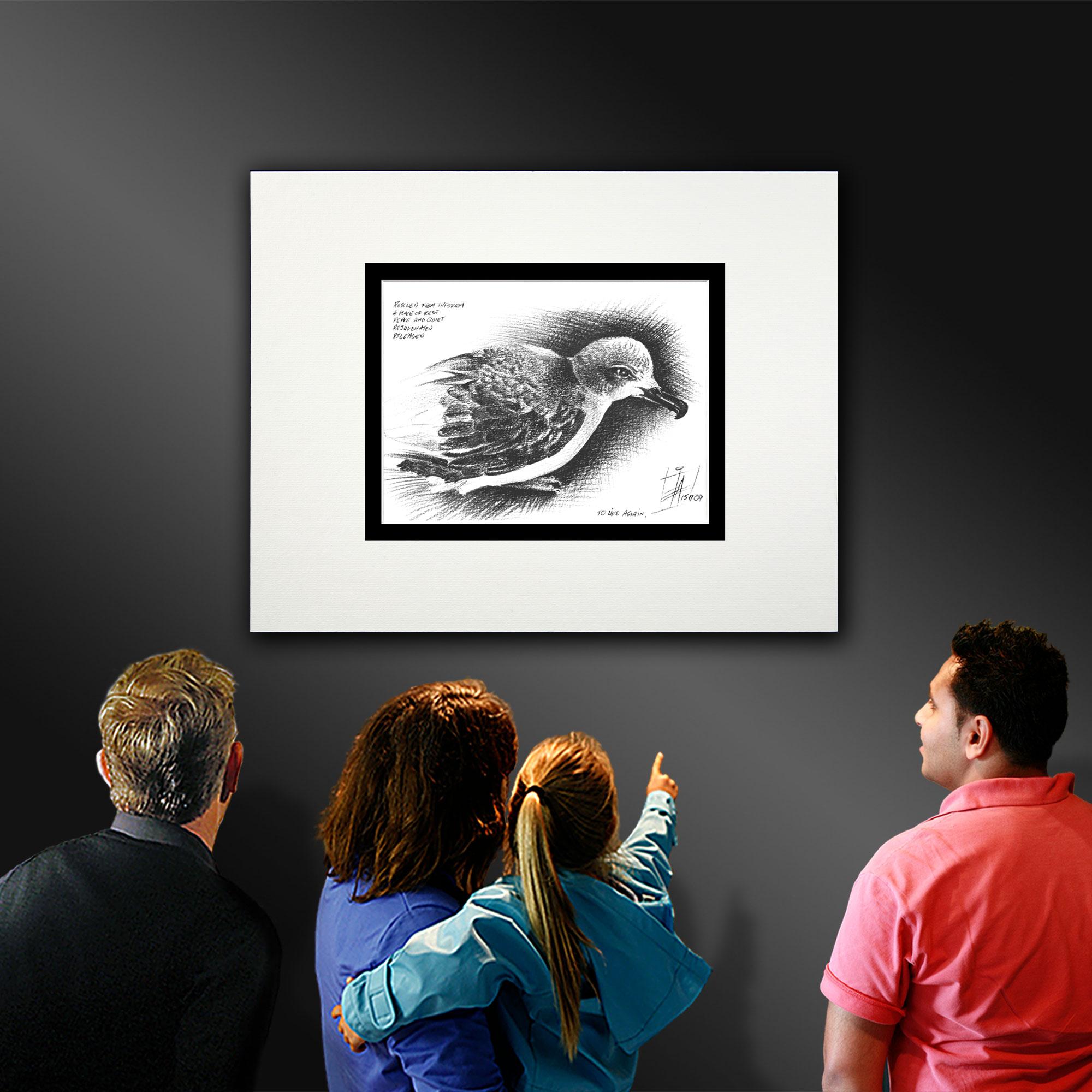 A pencil illustration of a resting Storm Petrel gallery display