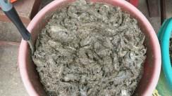 Fish paste