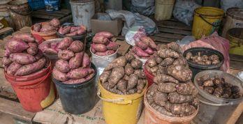 Sweet potato and taro
