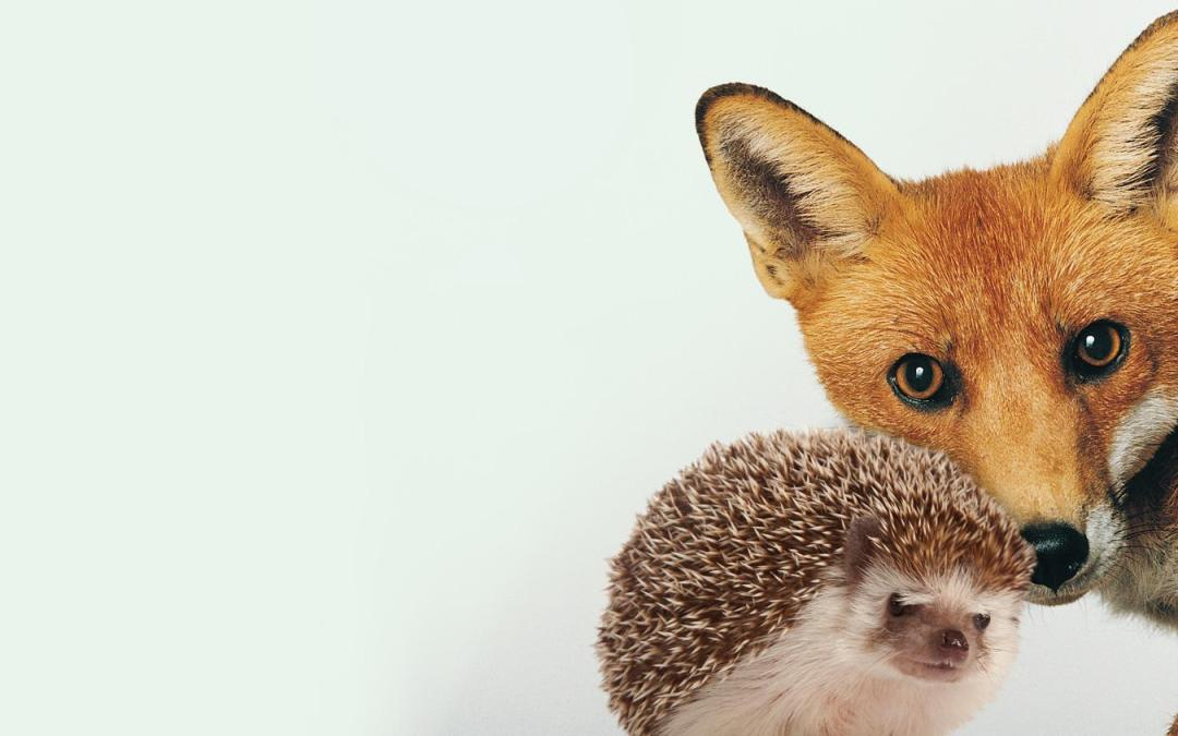 Which Leader Are You…  A Fox?  Or a Hedgehog?