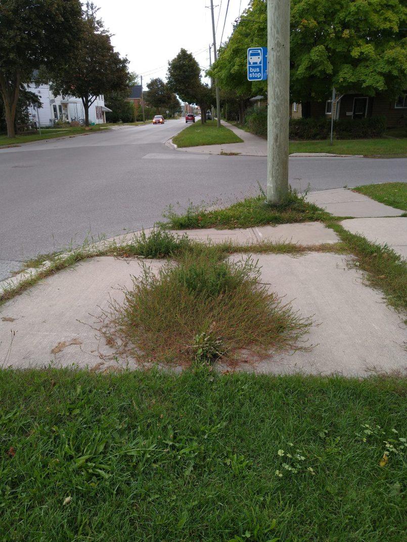 Weeds overgrowing a bus stop