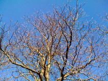 april-16-leafless
