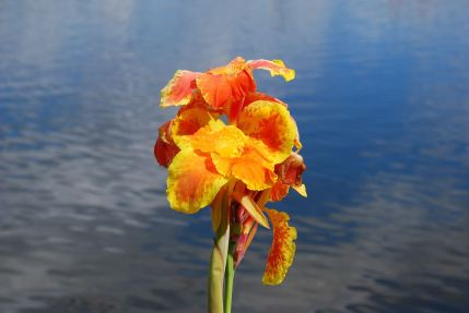 april-29-a-flower-at-celebration-lake