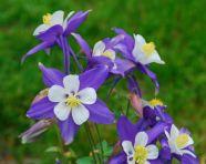 may-16-purple