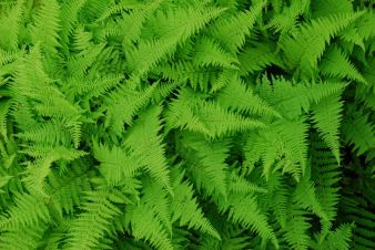 july-19-ferns-from-above