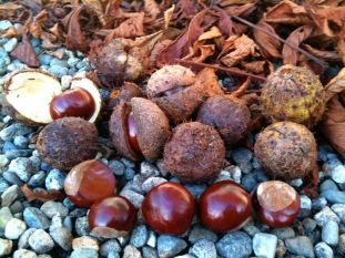 october-6-conkers